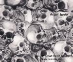 RC-801 Dead Hedz Skulls Black Clear